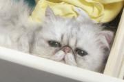 Το εβδομαδιαίο πρόγραμμα της γάτας σας