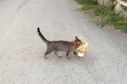 Γάτα έκλεψε λούτρινο τιγράκι από τον γείτονα
