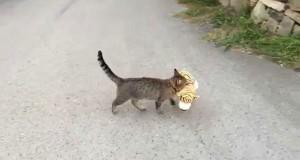 Γάτα έκλεψε λούτρινο τιγράκι από τον γείτονα (Video)