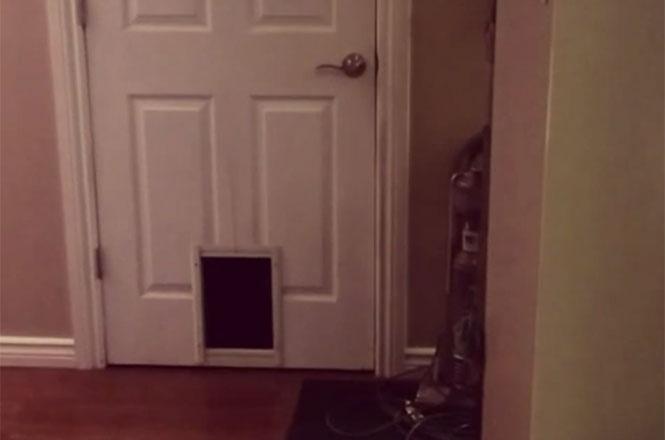 Γάτα χρησιμοποιεί πορτάκι γάτας, όπως μόνο μια γάτα θα έκανε...
