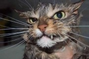 Γάτες που μοιάζουν να ετοιμάζουν κάτι σατανικό (1)