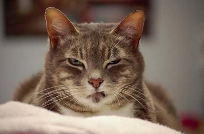 Γάτες που μοιάζουν να ετοιμάζουν κάτι σατανικό (3)