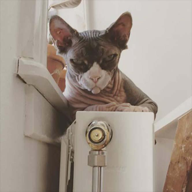 Γάτες που μοιάζουν να ετοιμάζουν κάτι σατανικό (4)