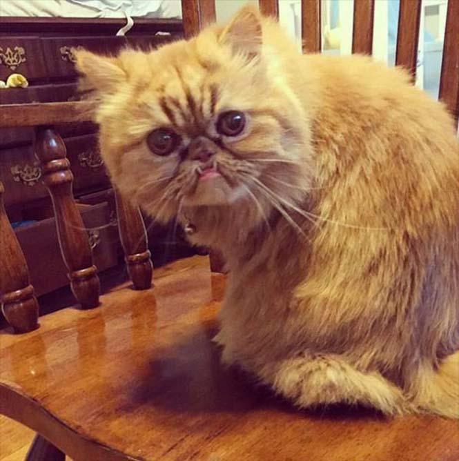 Γάτες που μοιάζουν να ετοιμάζουν κάτι σατανικό (5)