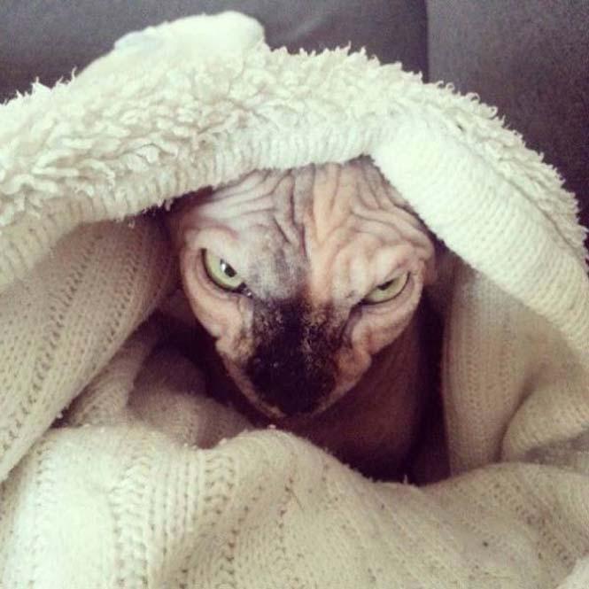 Γάτες που μοιάζουν να ετοιμάζουν κάτι σατανικό (8)