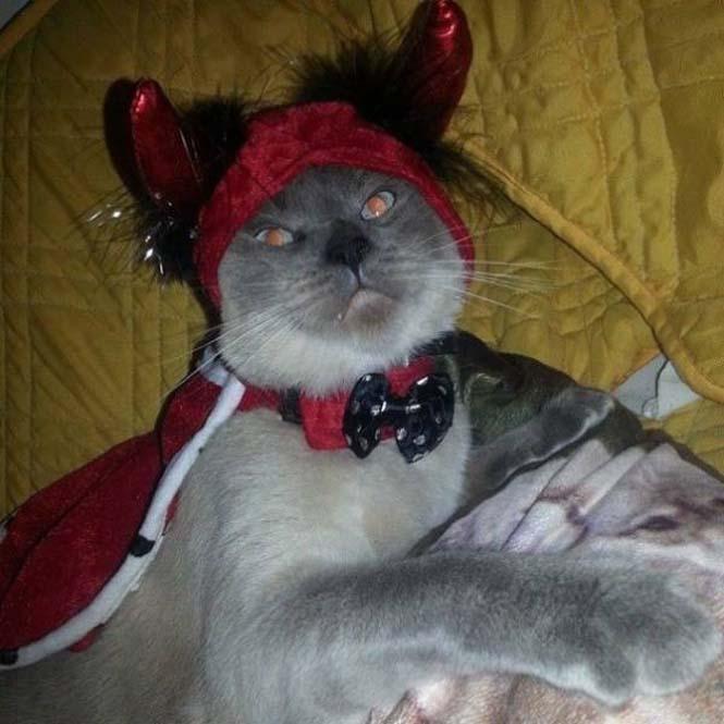 Γάτες που μοιάζουν να ετοιμάζουν κάτι σατανικό (10)
