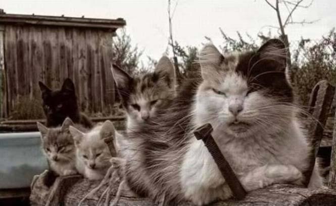 Γάτες που μοιάζουν να ετοιμάζουν κάτι σατανικό (11)