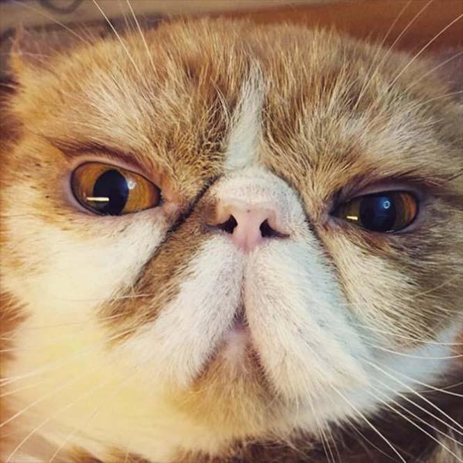 Γάτες που μοιάζουν να ετοιμάζουν κάτι σατανικό (13)