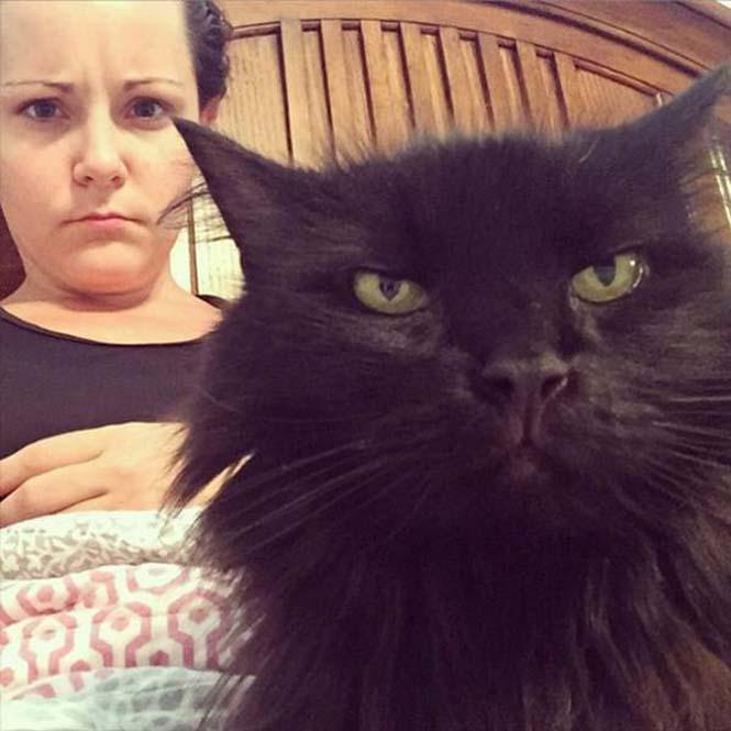 Γάτες που μοιάζουν να ετοιμάζουν κάτι σατανικό (15)