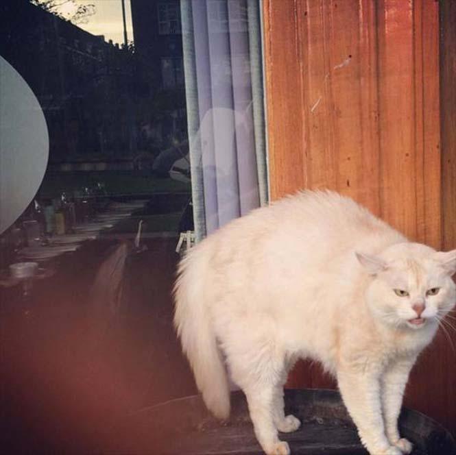 Γάτες που μοιάζουν να ετοιμάζουν κάτι σατανικό (17)