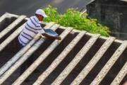 Ινδός ταΐζει 4.000 παπαγάλους κάθε μέρα (1)