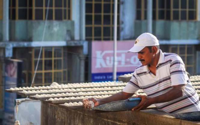 Ινδός ταΐζει 4.000 παπαγάλους κάθε μέρα (2)