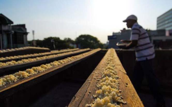 Ινδός ταΐζει 4.000 παπαγάλους κάθε μέρα (3)