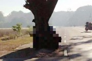 Η μέση του δρόμου είναι ένα πολύ κακό σημείο για ένα δένδρο (1)
