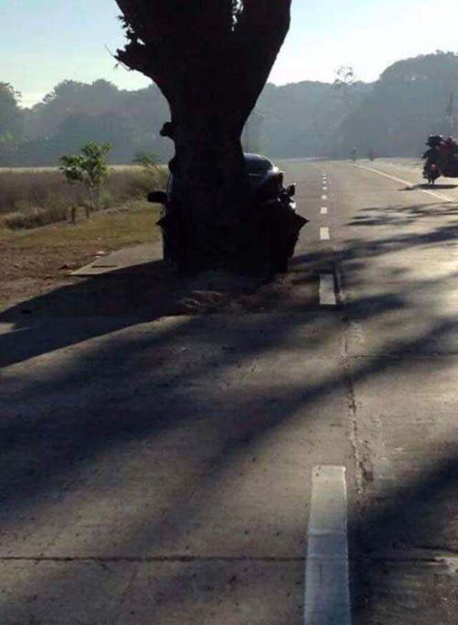 Η μέση του δρόμου είναι ένα πολύ κακό σημείο για ένα δένδρο (2)