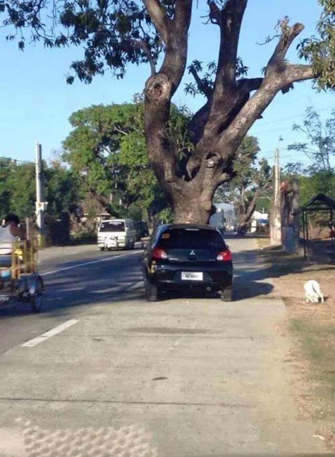 Η μέση του δρόμου είναι ένα πολύ κακό σημείο για ένα δένδρο (4)
