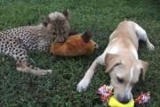 Μικρό τσιτάχ και σκύλος έγιναν κολλητοί