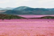Αυτό συμβαίνει όταν βρέξει στην πιο ξηρή έρημο της Γης (1)