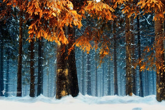 Χιονισμένο δάσος στην Γερμανία   Φωτογραφία της ημέρας