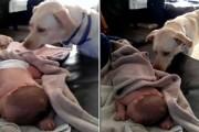 Σκύλος σε ρόλο Babysitter