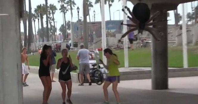 Τεράστια αράχνη σπέρνει τον τρόμο σε ανυποψίαστους περαστικούς