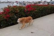 Ανεξάρτητοι σκύλοι