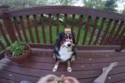 Αυτός ο σκύλος θα έκανε τα πάντα για μια λιχουδιά