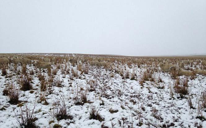 Μπορείτε να εντοπίσετε τα 500 πρόβατα που υπάρχουν σε αυτή την φωτογραφία; (2)