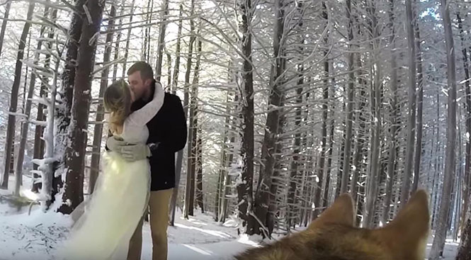 Γάμος από την οπτική σκύλου