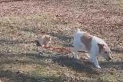 Αυτή η γάτα δείχνει στον σκύλο ποιος κάνει κουμάντο