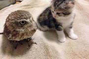 Γάτα και κουκουβάγια: Μια αξιολάτρευτη φιλία (1)