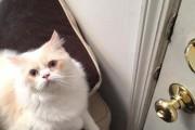 Αυτή η γάτα δεν θέλει να πηγαίνει ο ιδιοκτήτης της στην δουλειά (1)
