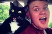 Γάτες που... κάνουν τα δικά τους! #21 (4)