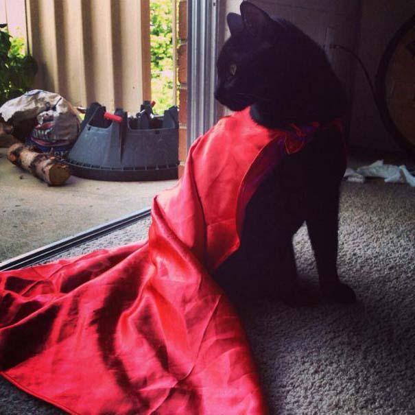Γάτες που... κάνουν τα δικά τους! #21 (14)