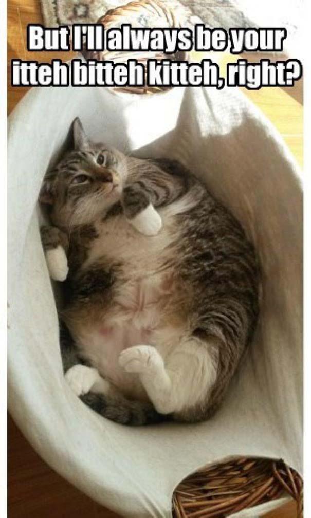 Γάτες που... κάνουν τα δικά τους! #22 (4)