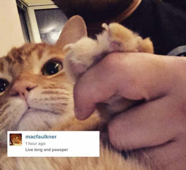 Γάτες που... κάνουν τα δικά τους! #22 (5)