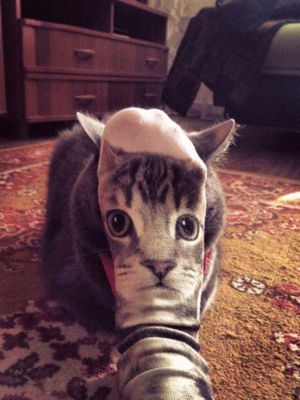 Γάτες που... κάνουν τα δικά τους! #22 (7)