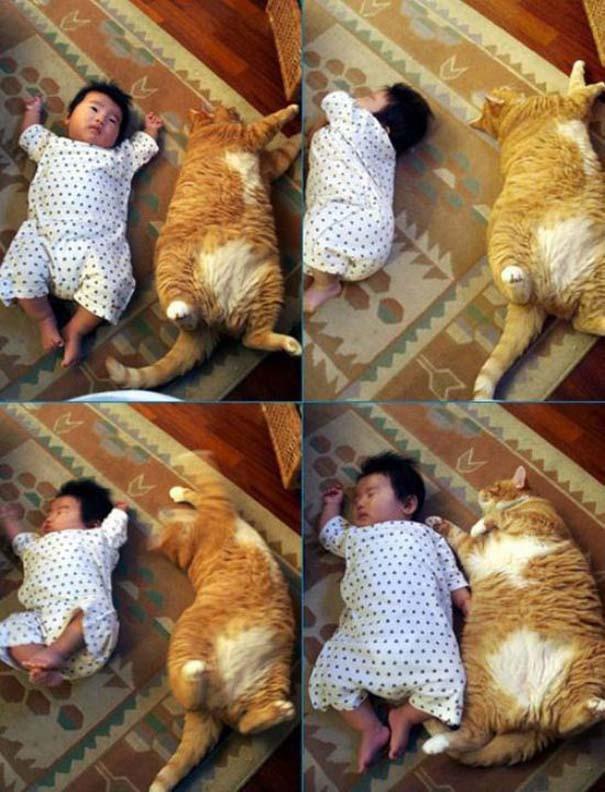 Γάτες που... κάνουν τα δικά τους! #22 (8)