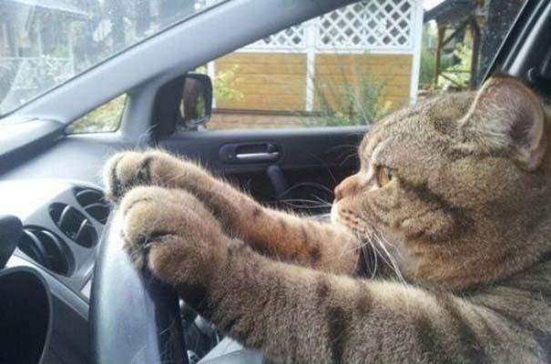 Γάτες που... κάνουν τα δικά τους! #22 (9)