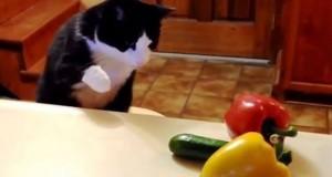 Γάτες εναντίον… αγγουριών (Video)