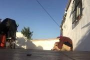 Γύρισε από διακοπές και έκανε έκπληξη στον σκύλο του