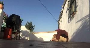 Γύρισε από διακοπές και έκανε μια απίθανη έκπληξη στον σκύλο του (Video)