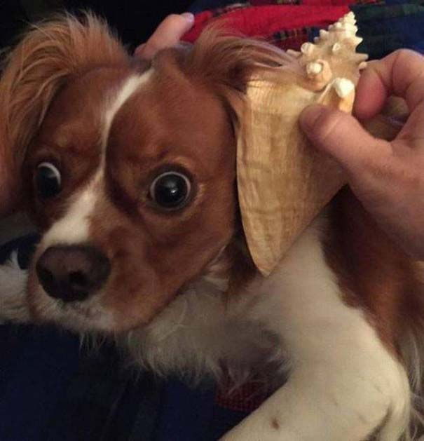Οι πιο απίθανοι σκύλοι του 2015 (4)