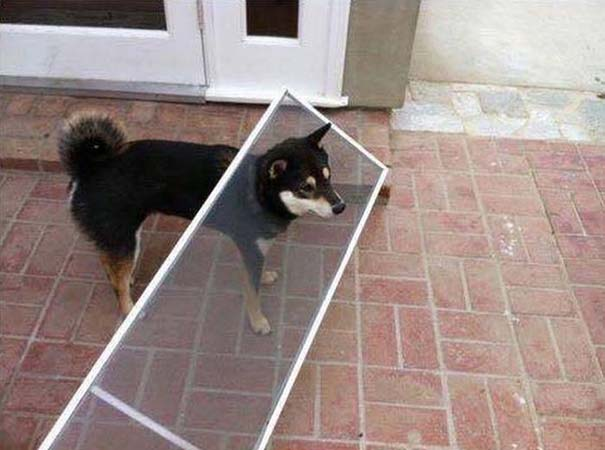 Οι πιο απίθανοι σκύλοι του 2015 (11)