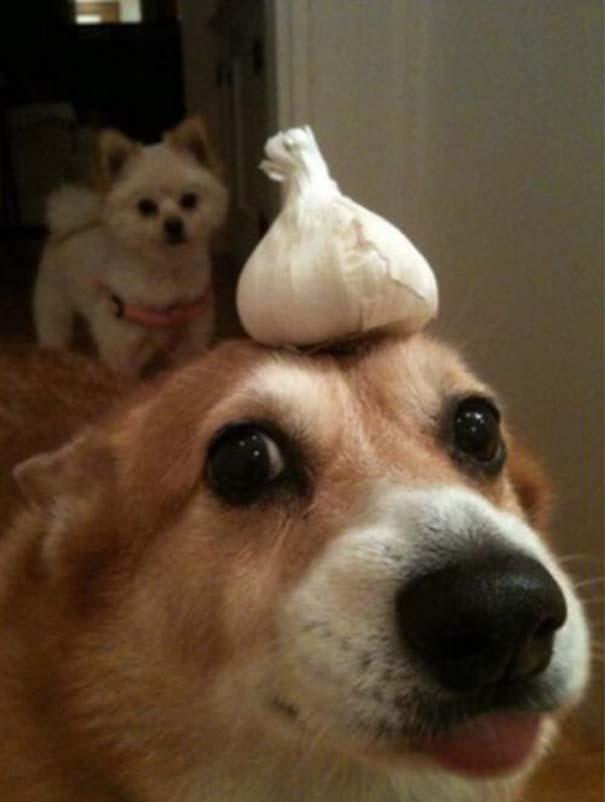 Οι πιο απίθανοι σκύλοι του 2015 (14)