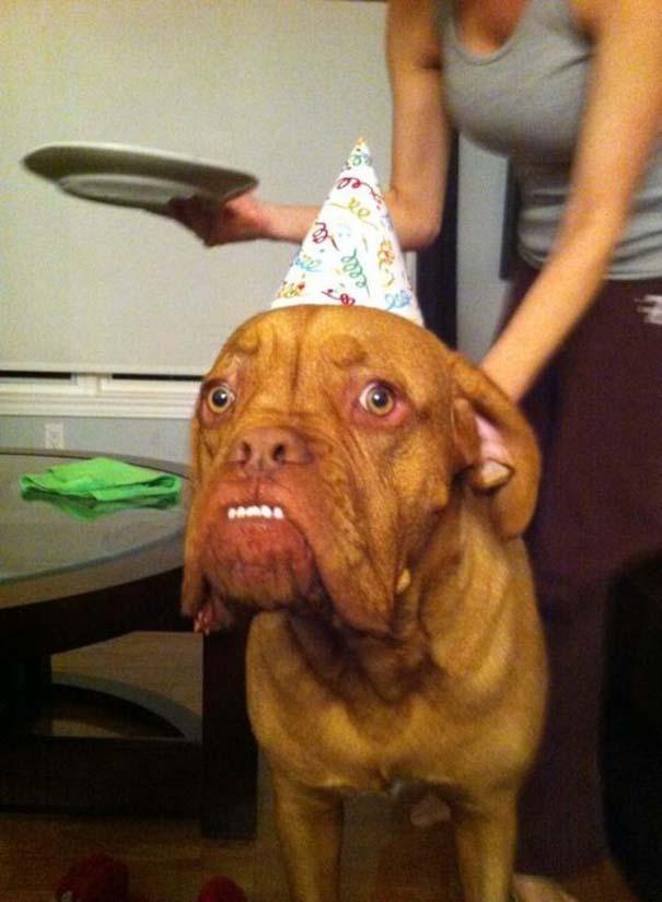 Οι πιο απίθανοι σκύλοι του 2015 (16)