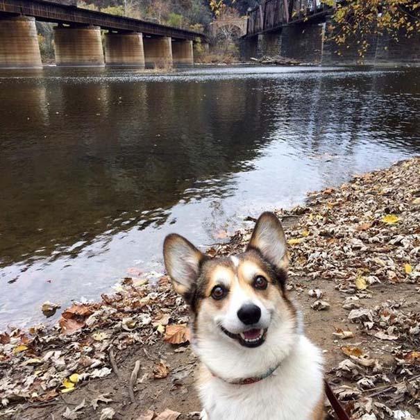 Οι πιο απίθανοι σκύλοι του 2015 (17)