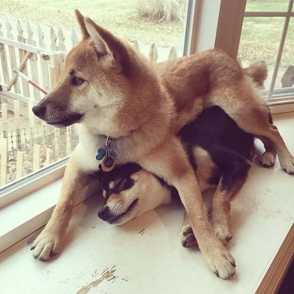 Οι πιο απίθανοι σκύλοι του 2015 (24)