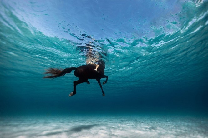 Κολυμπώντας με το άλογο | Φωτογραφία της ημέρας