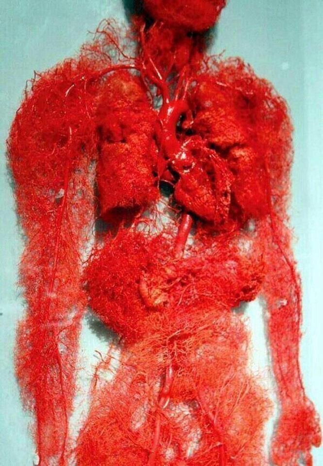 Τα αιμοφόρα αγγεία του ανθρώπινου σώματος | Φωτογραφία της ημέρας